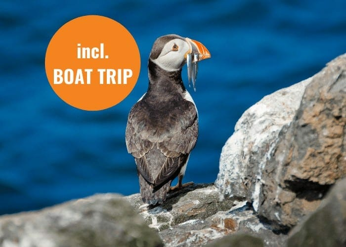 Farne Island Wildlife Tour of Newcastle